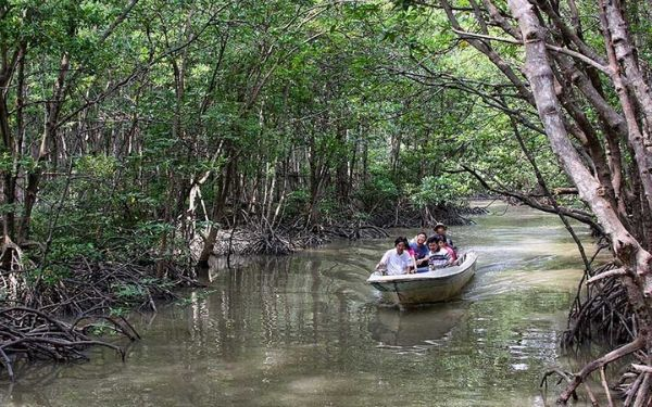 Take a mangrove-forest boat trip in Cà Mau