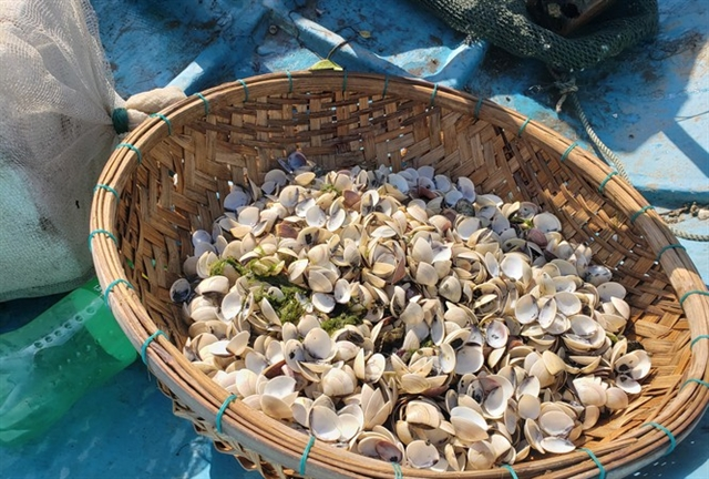Clam deaths leave farmers with losses