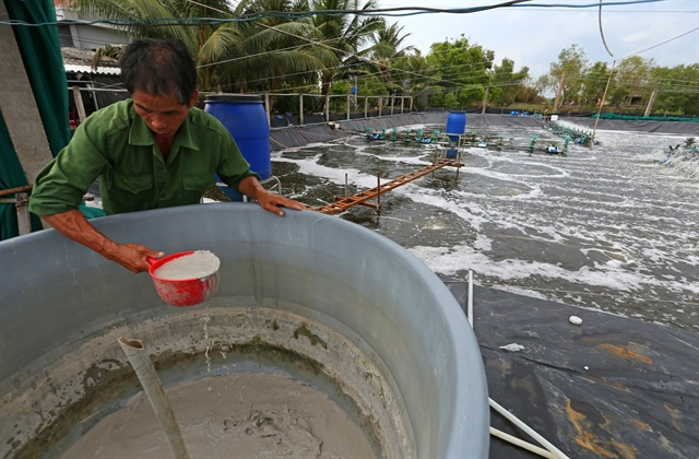 Cà Mau shrimp industry picks up