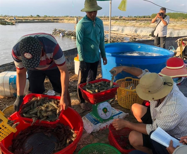 Bạc Liêu Province focuses on becoming shrimp production hub
