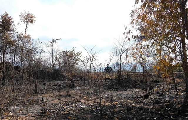 Hot weather brings high risk of forest fires in central province