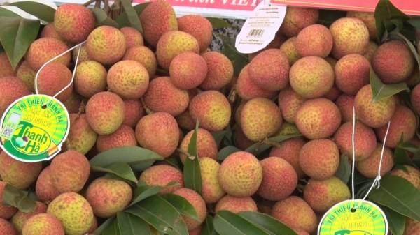 Hải Dương exports first lychees to Japan