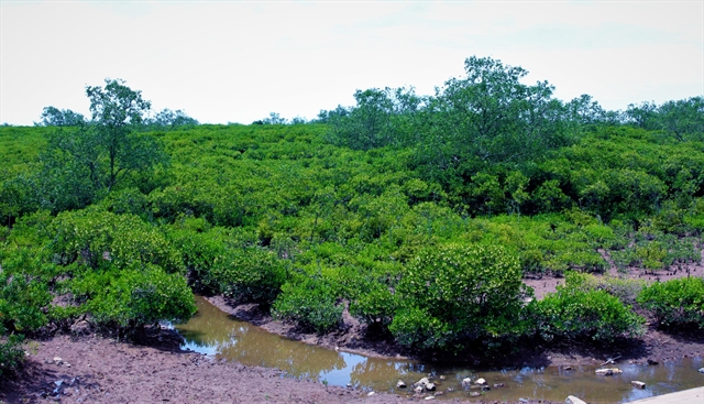 Wetland nature reserve founded in Thái Bình Province