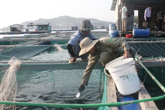 Khánh Hòa embraces advanced technologies for marine aquaculture