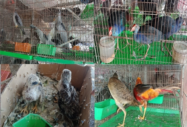 Việt Nam bans wildlife trade: PMs directive