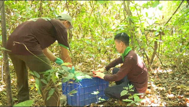 42 animals released in national park