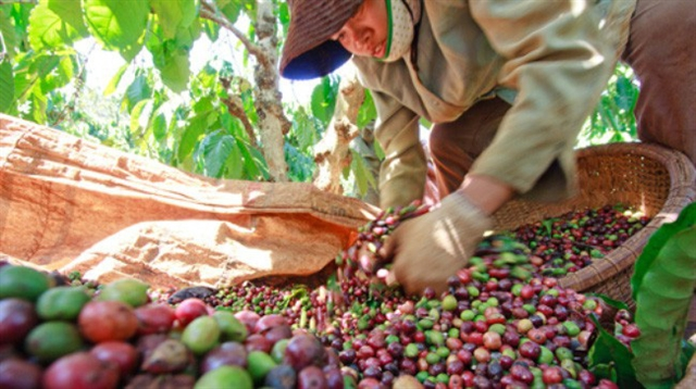 Việt Nams coffee exports up in H1