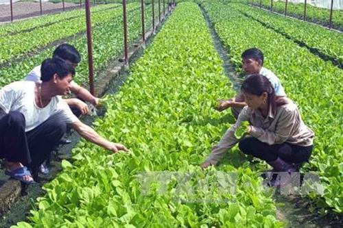Organic agriculture projectadopted