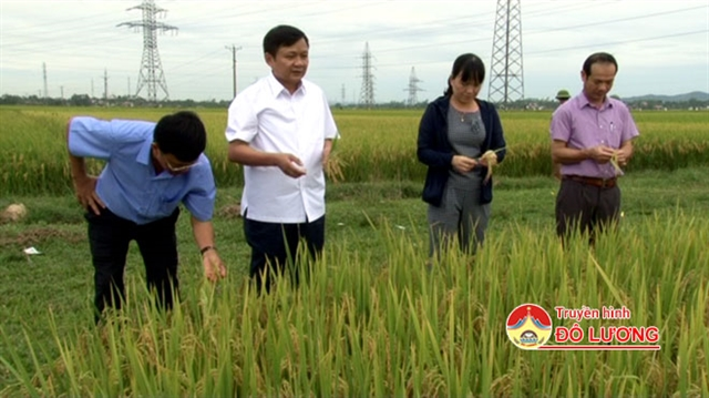 New rice variety for flood and drought-prone areas