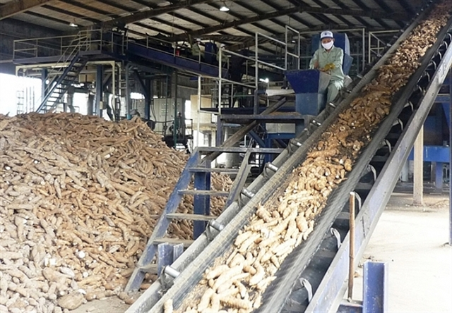 Cassava exports up by 15.2 per cent in volume in first seven months