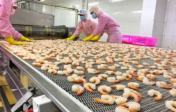 VN shrimp exports to US expected to increase by 20 per cent