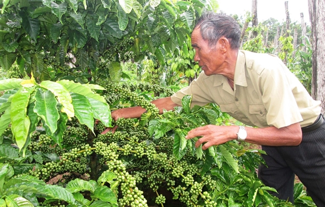 Việt Nams first batch of coffee under EVFTA exported