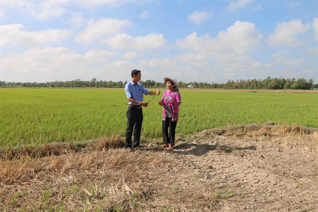 Trà Vinh loses 43m to saltwater intrusion drought damage