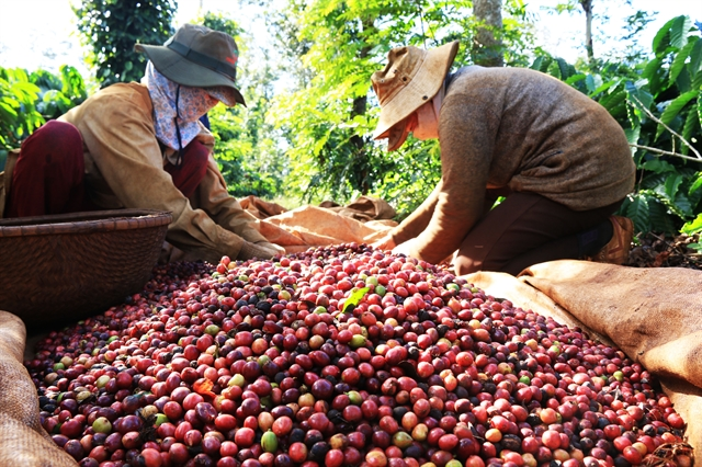 Việt Nam becomes Japans biggest coffee supplier