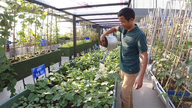 Rooftop garden is peaceful retreat,food resource for HCM City family