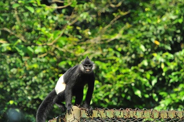 PM calls for action to protect endangered langurs in Hà Nam
