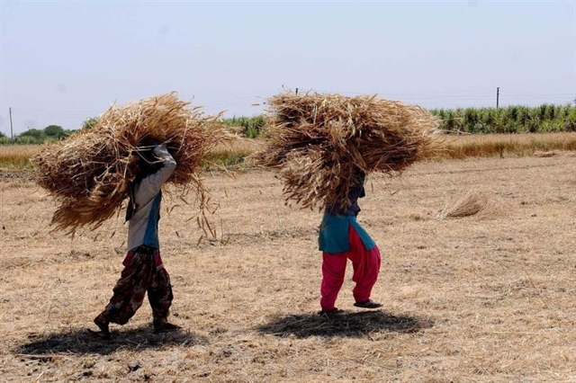 World News Day: Indian farmers at risk of losing harvest due to COVID lockdown