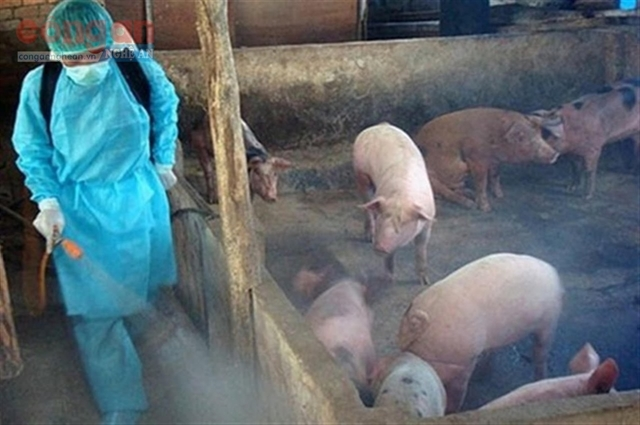 African swine fever under control