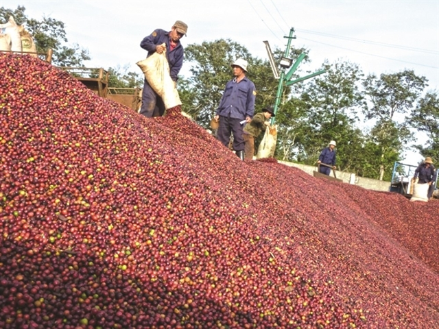 Coffee exports consumption drop due to COVID-19