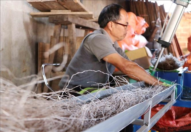 Canna vermicelli producers busy as Tết nears