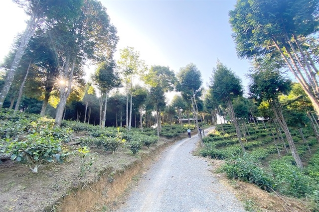 The man who brings back green to barren hill in Kỳ Sơn District