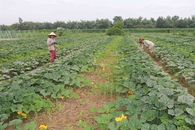 Trà Vinh to dredge irrigation canals to better cope with dry season