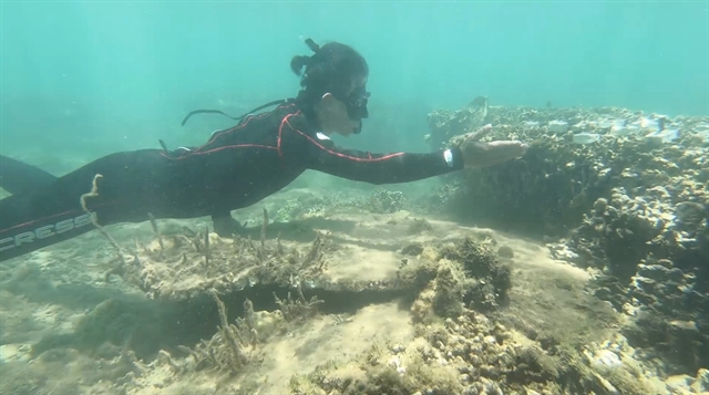 Coral saviours battle to turn the tide