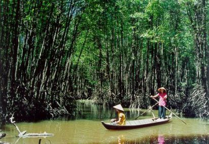 Take a day boat trip to the mangrove forests in Cà Mau
