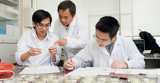 Vietnamese scientist in Japan discovers invasive plants health benefits