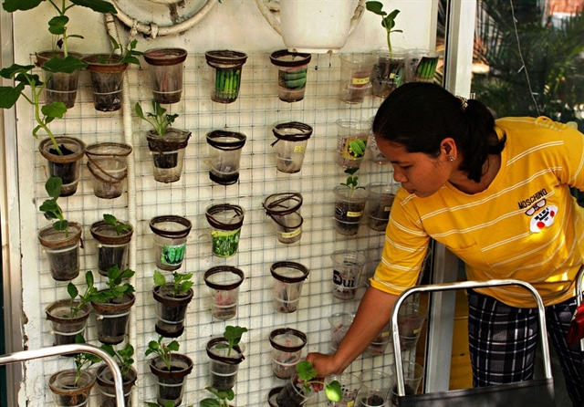 Free plant shop for tree lovers in HCM City