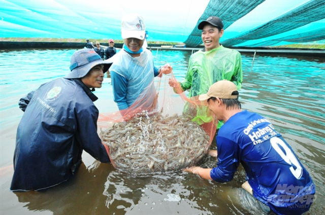 Bạc Liêu should focus on hi-tech shrimp farming: deputy minister
