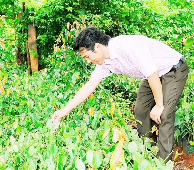 Farmer brings Bầu Mây pepper abroad