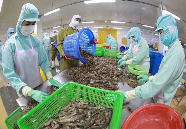 Shrimp exporters accelerate production