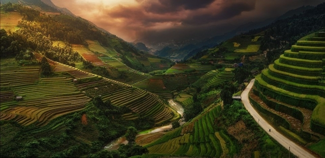 Picture of Vietnamese rice terraces enters prestigious photography competition