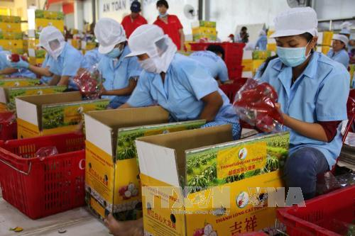 Officials businesses discuss measures to boost export of fruits vegetables to EU