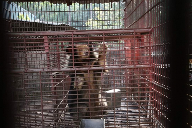 Over 1130 wild animals rescued in Việt Nam in 2020