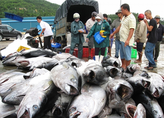Tuna exports to the US increase