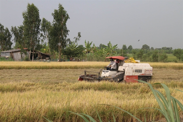 Mekong Delta saves winter-spring crop from drought saltwater intrusion