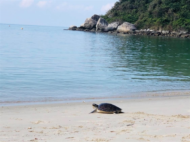 Endangered sea turtle returned to ocean