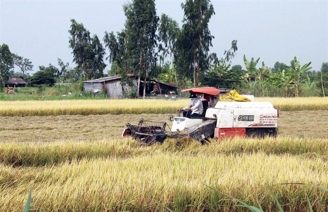 Mekong Delta farmers get bumper harvest high prices for winter-spring rice
