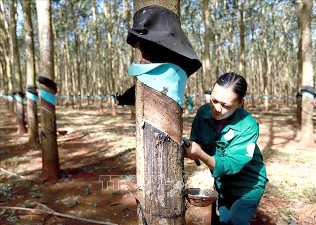 Vietnam Rubber Group posts rising revenue and profit in 2020