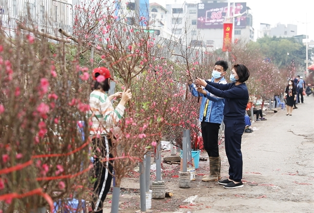 COVID-19 outbreak takes a toll on peach blossom sales