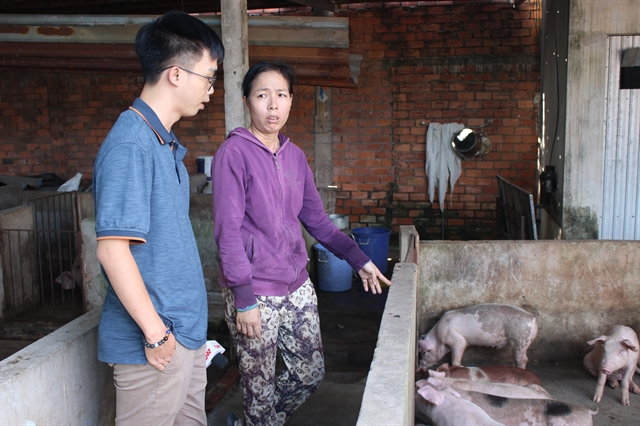 HCM City to switch from pork production to pig breeding