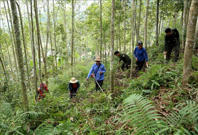 Tuyên Quang focuses on forestry economic development