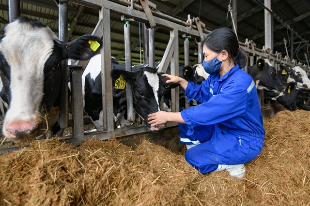 Việt Nams dairy industry reaches out to the world