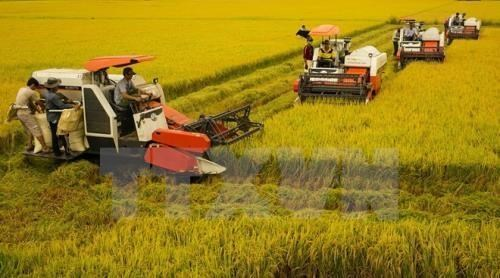 Việt Nam aims to reduce greenhouse gas emissions in rice sector