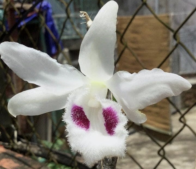 Dozens duped by mutant orchid scams