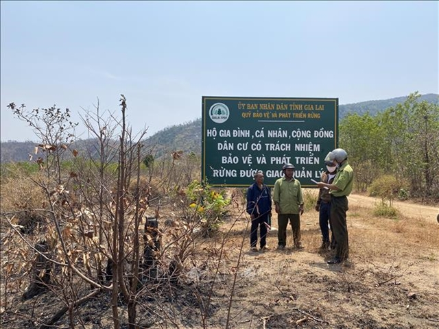 Gia Lai Province fights back against illegal forest destruction
