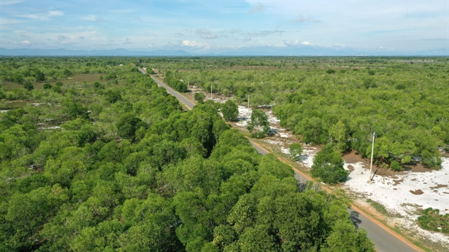 Việt Nam aiming to become one of the worlds leading centres of wood production and processing