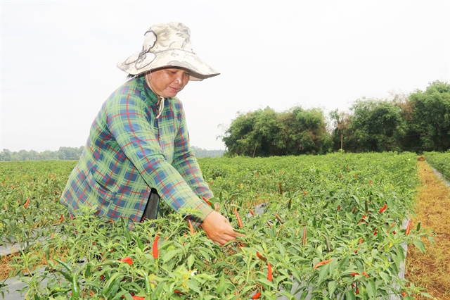 Trà Vinh eyes makeover of agriculture with advanced techniques, restructure